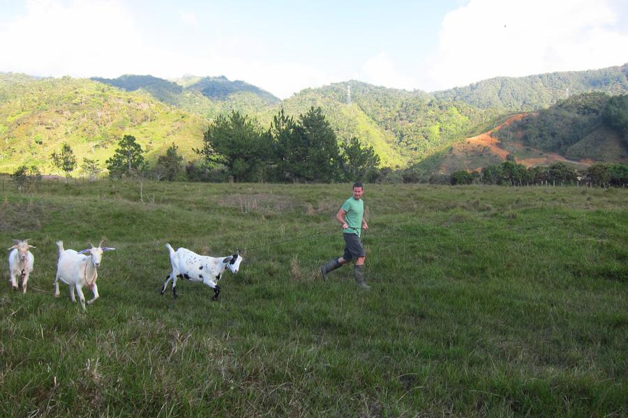 Ecohostel Medellin Goats